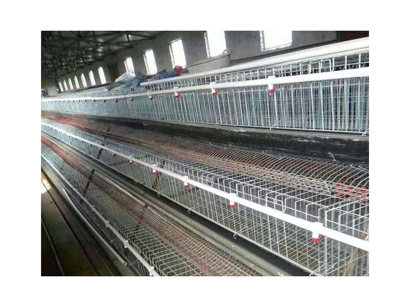 Chicken cages culture equipment