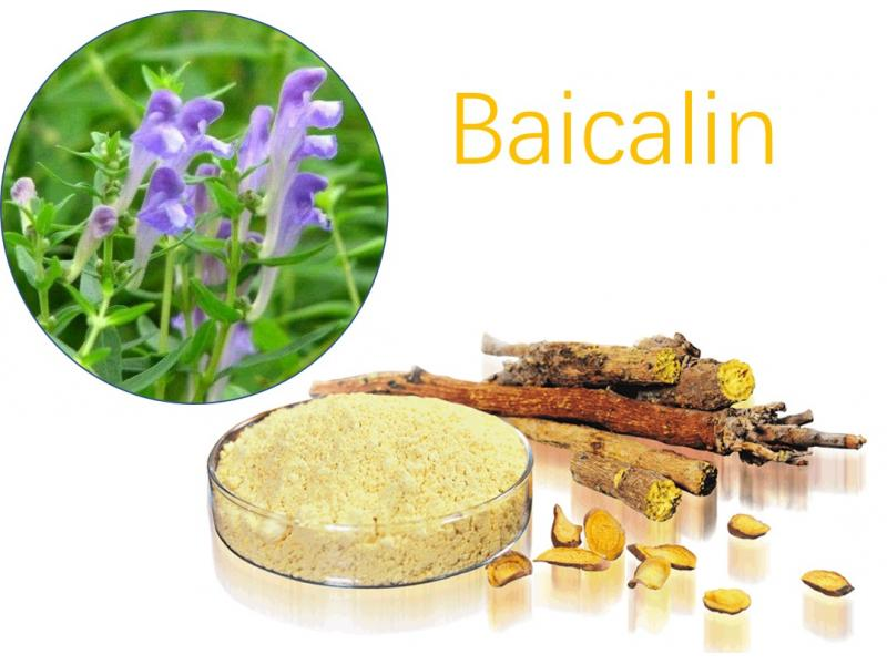 Natural 85% 95% Scutellaria Baicalensis Extract Baikal Skullcap Root Extract Baicalin