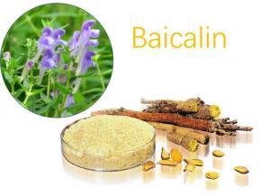 Natural 85% 95% Scutellaria Baicalensis Extract Baikal Skullcap Root Extract Baicalin