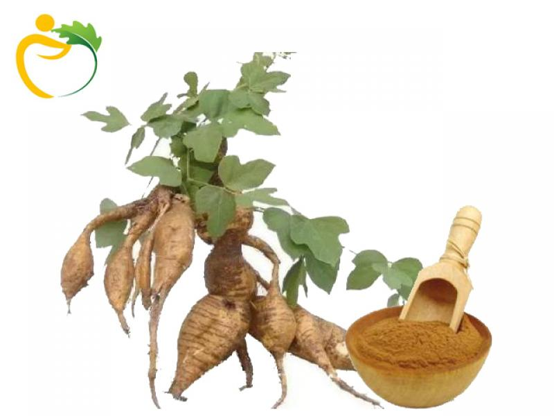 Natural kudzu root extract Powder  Isoflavones 40%    Puerarin 15%