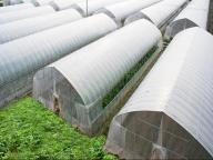 Tunnel Plastic Film Greenhouse Agriculture Single-span Greenhouse