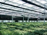 Venlo Glass Greenhouse Agricultur Flower Greenhouse