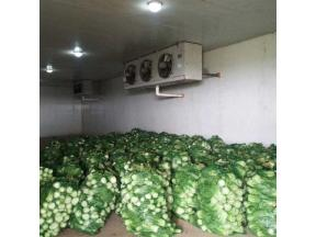 Vegetable Cold Room