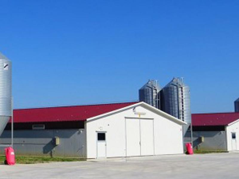 Steel Structure Prefab Poultry House Poutry Farming