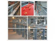 El Salvador Hot Sale Battery Layer Cage with Good Design & Hot Galvanized Chicken Cage