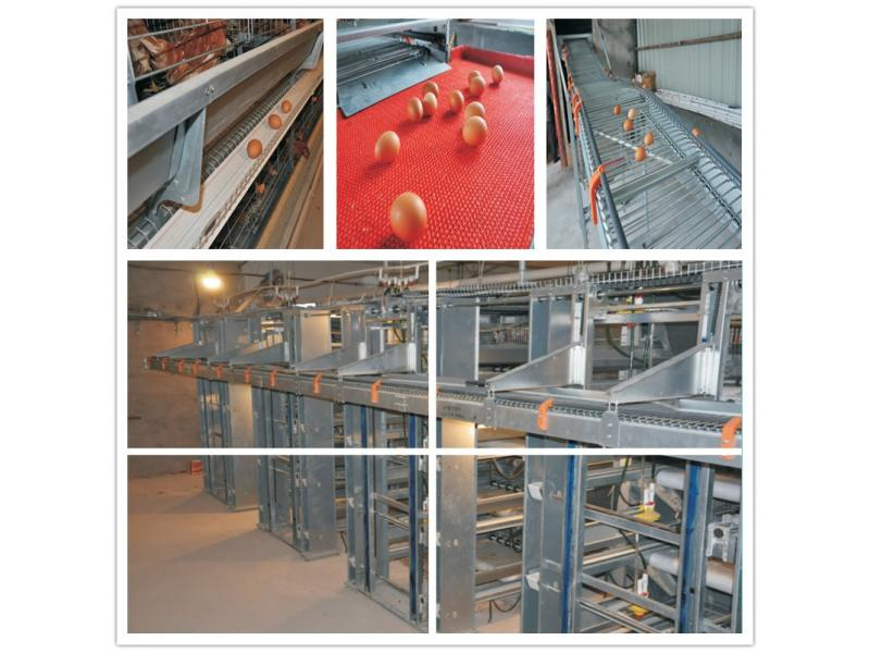 H Frame Layer Chicken Cage System and Poultry Fram/House Solutions