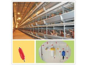 Automatic Chicken Farm Poultry Equipment for Sale