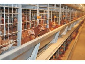 H Type Automatic Layer Farm Cage Poultry Equipment