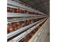 Winworld Automatic Chicken Farm Poultry Battery Cage System/Battery Layer Poultry Cage