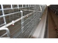 Chile Poultry Layer Farm Good Price 3 Tiers A Type Battery Chicken Cage System & Pullet Cage