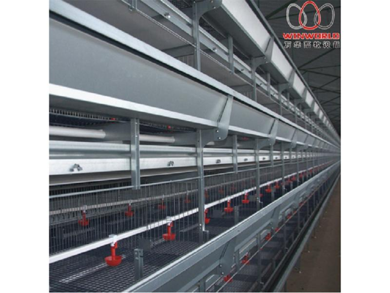 Egypt H Type Battery Pullet Chicken Cage for Poultry Farm