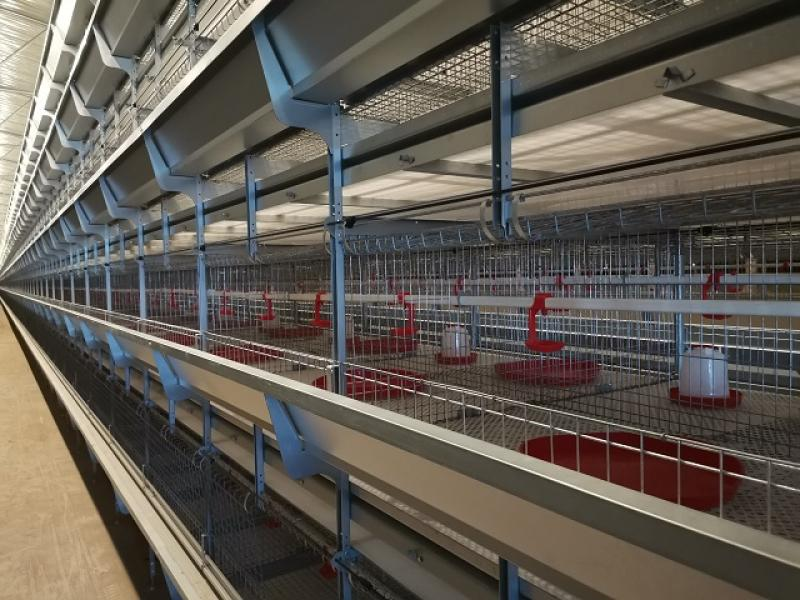 Niger Cage a Poulet H Type Battery Pullet Chicken Cage for Poultry Farm