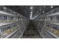 a Frame Automatic Broiler Chicken Cage for Poultry Farm