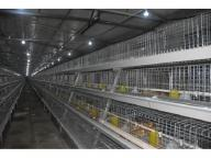 a Frame Automatic Hot Galvanization Broiler Chicken Cage with Automatic Feeding System