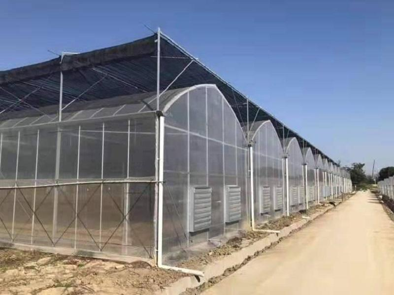 Polycarbonate Sheet Green House for Vegetbable