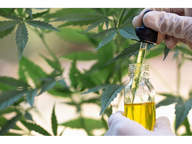 CBD Oil Extraction System