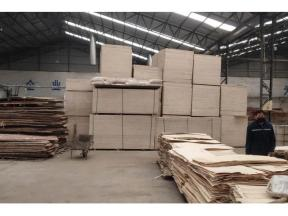 Construction Plywood Without Film Manufacturer