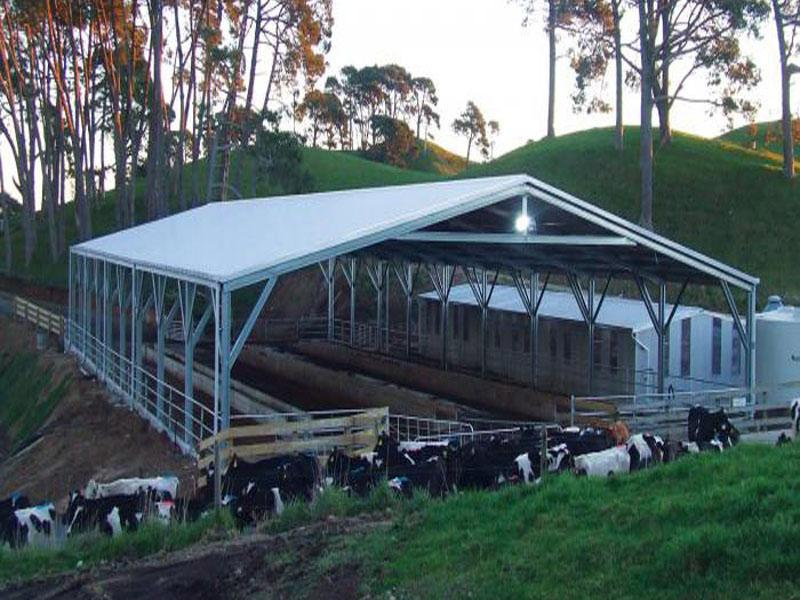 Closed Type Steel Chicken House/Poultry House/Cow Shed
