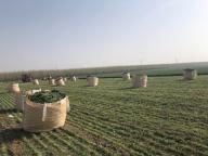 Shandong Kawo Eco-agriculture Co., Ltd.