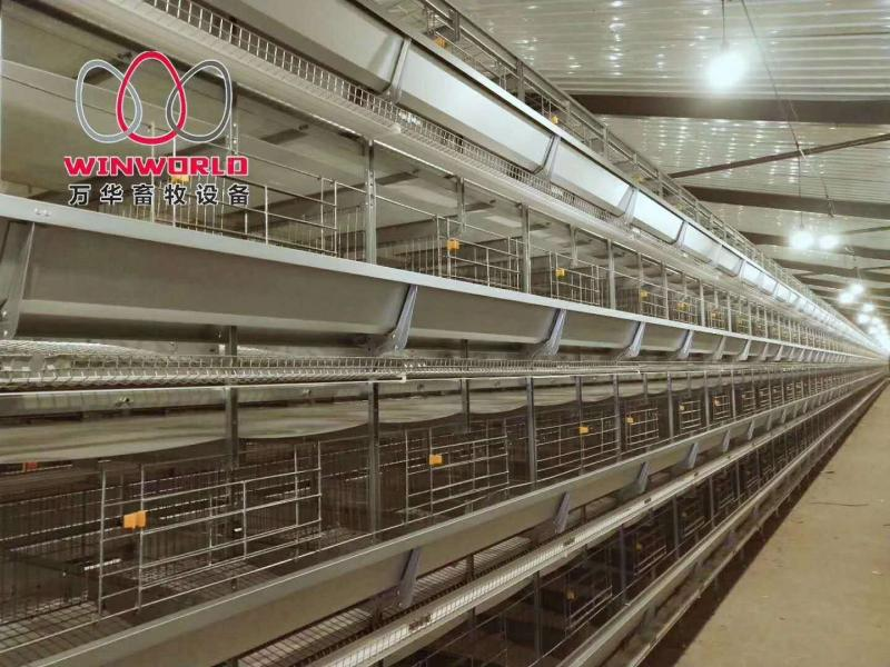 Design 5000 Birds Chicken Layer Cages Factory Price Poultry Battery Cage for Sale Zambia
